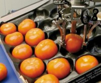 Placement of tomatoes into a shelf ready punnet can be completed in a gentile manner without waste
