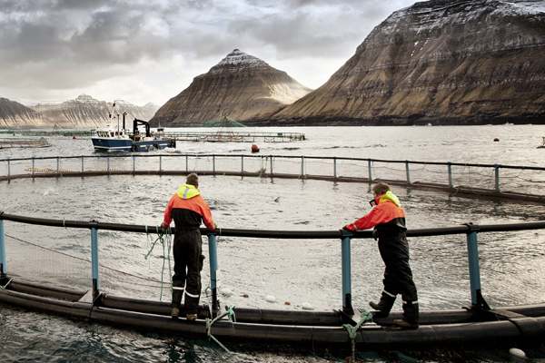 Fish producer scales up