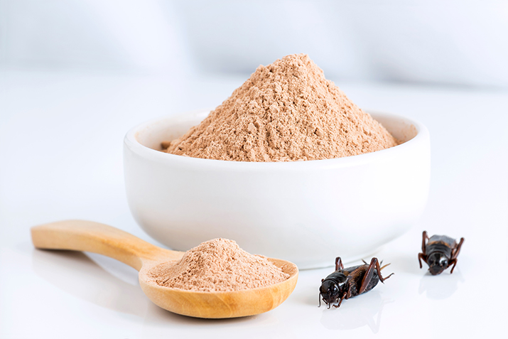 FutureBridge identifies three insect sources primed as top protein alternatives