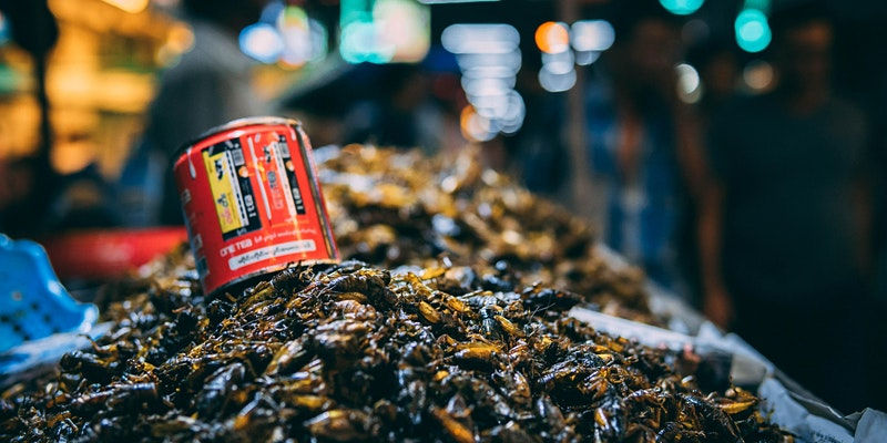 Edible Insects: building up an appetite for a new kind of grub