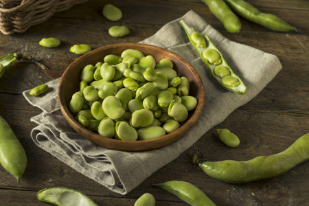 Faba bean protein to revolutionise global market for plant-based diets