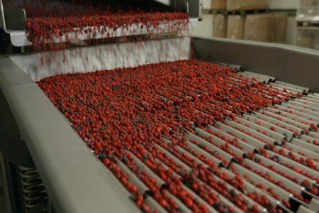 Berry good sorting