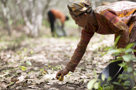 Olam Food Ingredients announces new targets for global cashew supply chains