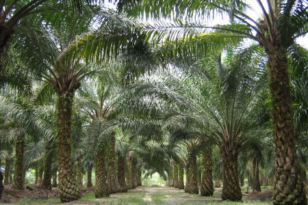 Sustainable palm oil guide