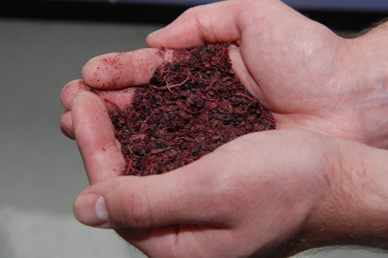 Project to turn pomace into food