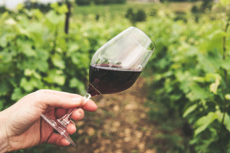 Online wine retailer reports record-breaking year
