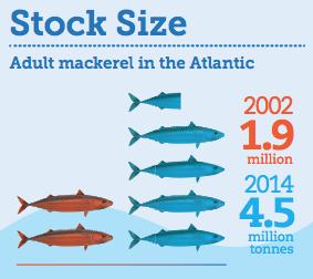 Mackerel's welcome return to plates