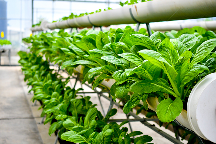 New project develops kitchen gardens using sustainable vertical farming for personalised nutrition