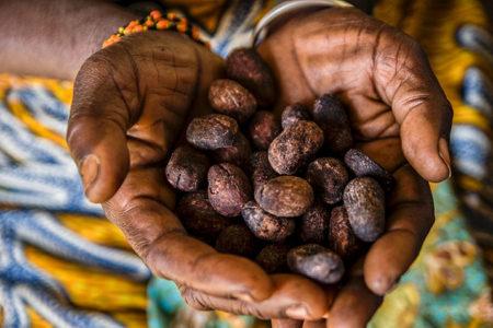 AAK's Kolo Nafaso shea programme supports ethical chocolate category surge