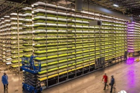 Cargill partners with vertical farming leader AeroFarms