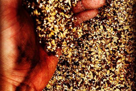 Rabobank reports concern over hops and barley shortages