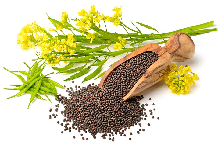 Canola protein will emerge as strong contender in plant-based protein market by 2025, says FutureBridge