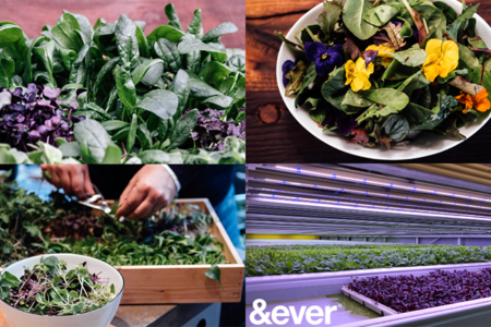 &ever opens first large-scale indoor vertical farm in the Middle East