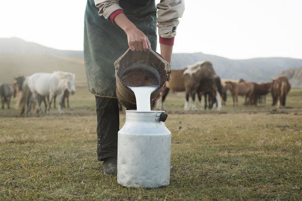 Horse milk is better for us than cow's milk, research reveals