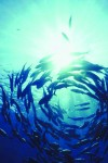 Fish updates from the Marine Conservation Society