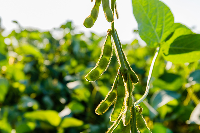 New report explores present and future possibilities for plant proteins